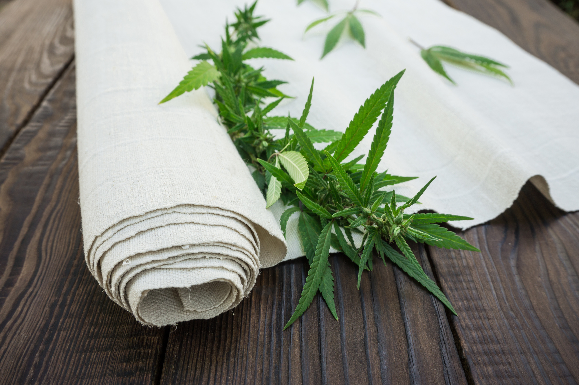 Products Made from Hemp Are Great for the Environment